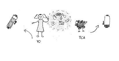 Historias de un TCA