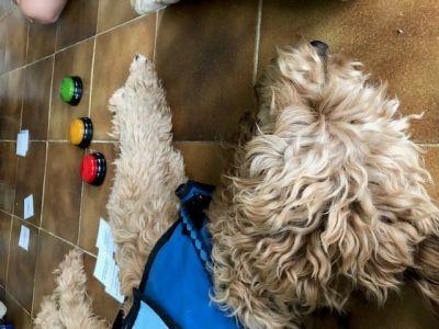 Terapia asistida con perros en la Unidad de Neurodesarrollo